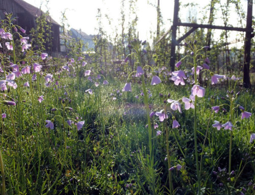Der Garten im April, Teil 2