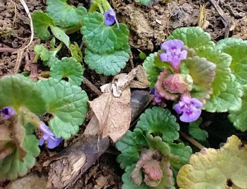 Der Garten im April, Teil 1